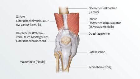 Anatomie des Knies