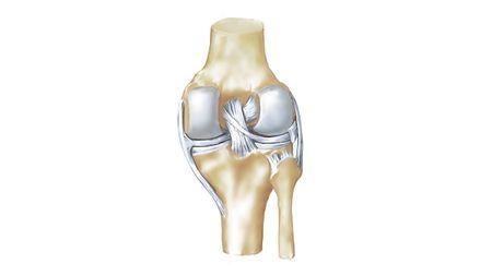 Anatomia da articulação do joelho