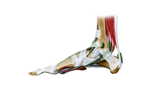 Die Achillessehne