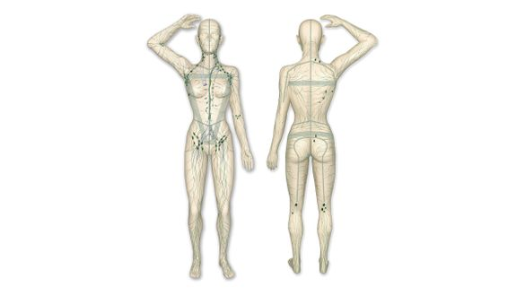 Sistema linfático do corpo humano