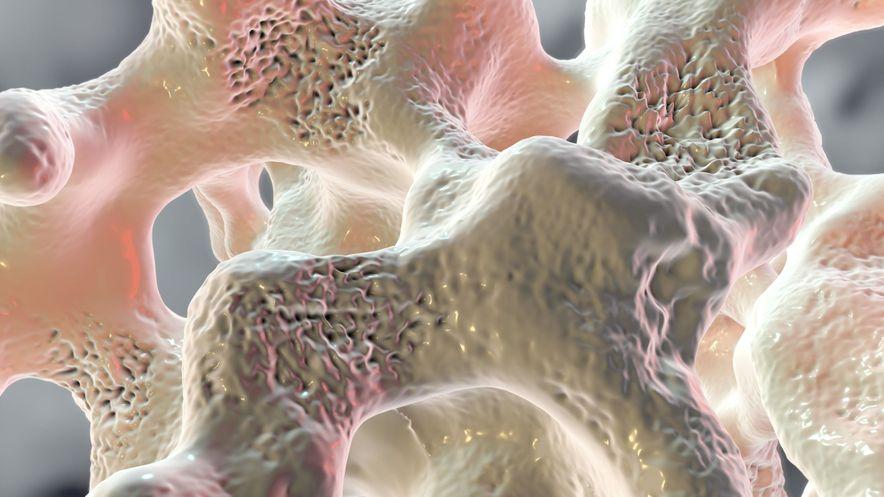 Abbildung eines Schwammknochens