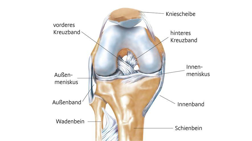 Anatomie des Kniegelenks inklusive Beschriftung