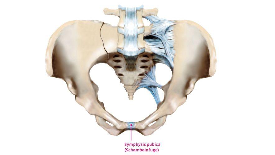 Schmerzen an der Symphyse (Schambeinfuge)
